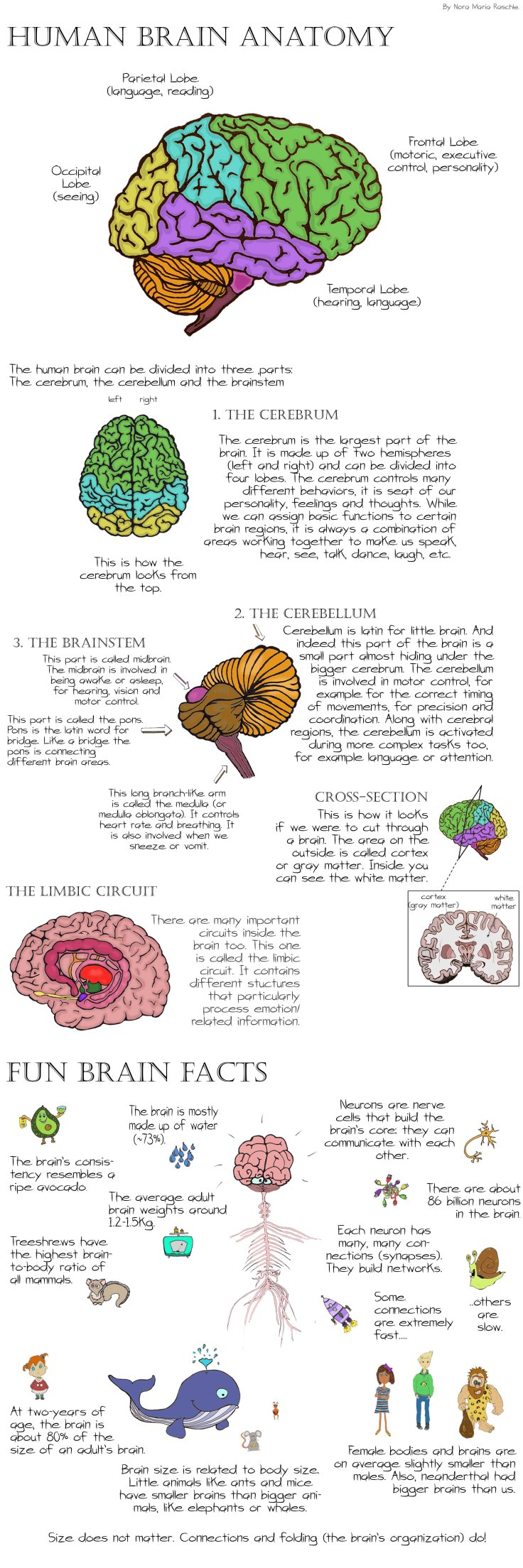 BrainAnatomy_Long
