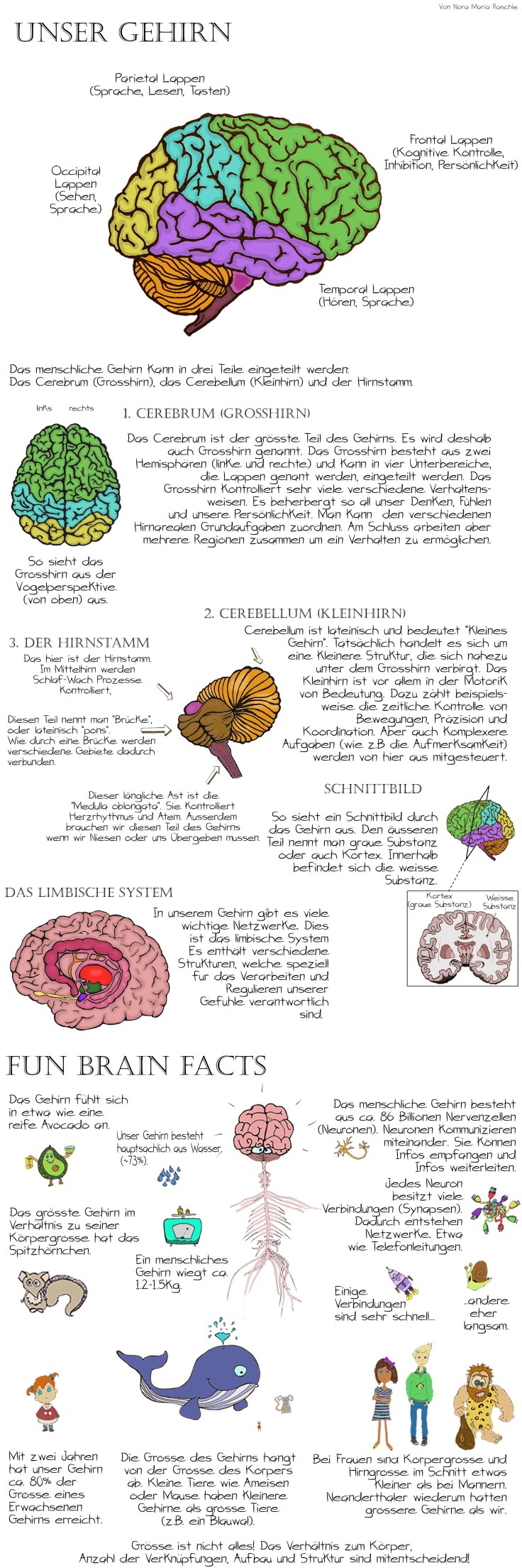 BrainAnatomy_Long_Deutsch