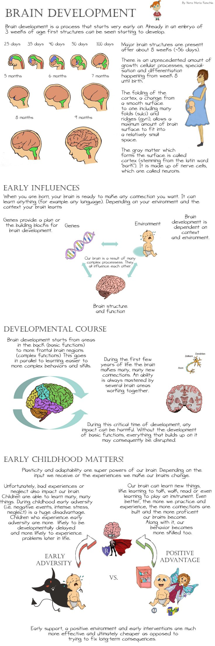 BrainDevelopment_Long