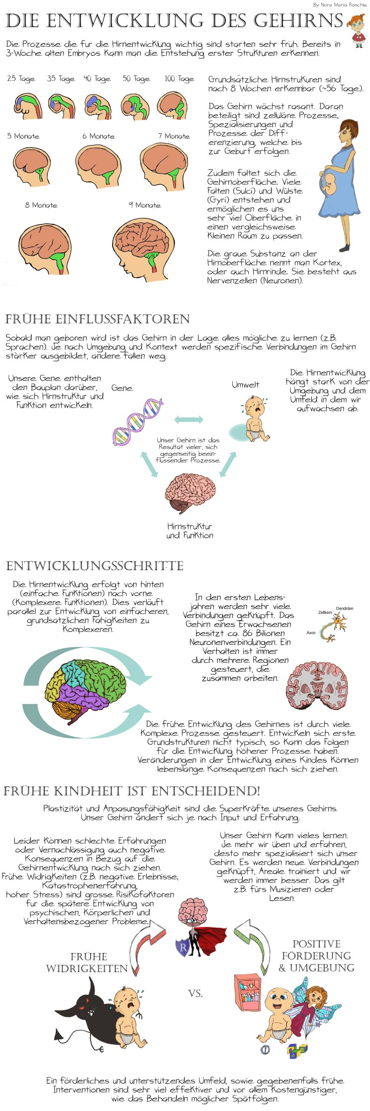 BrainDevelopment_Long_Deutsch
