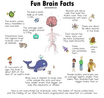 Fun Brain Facts