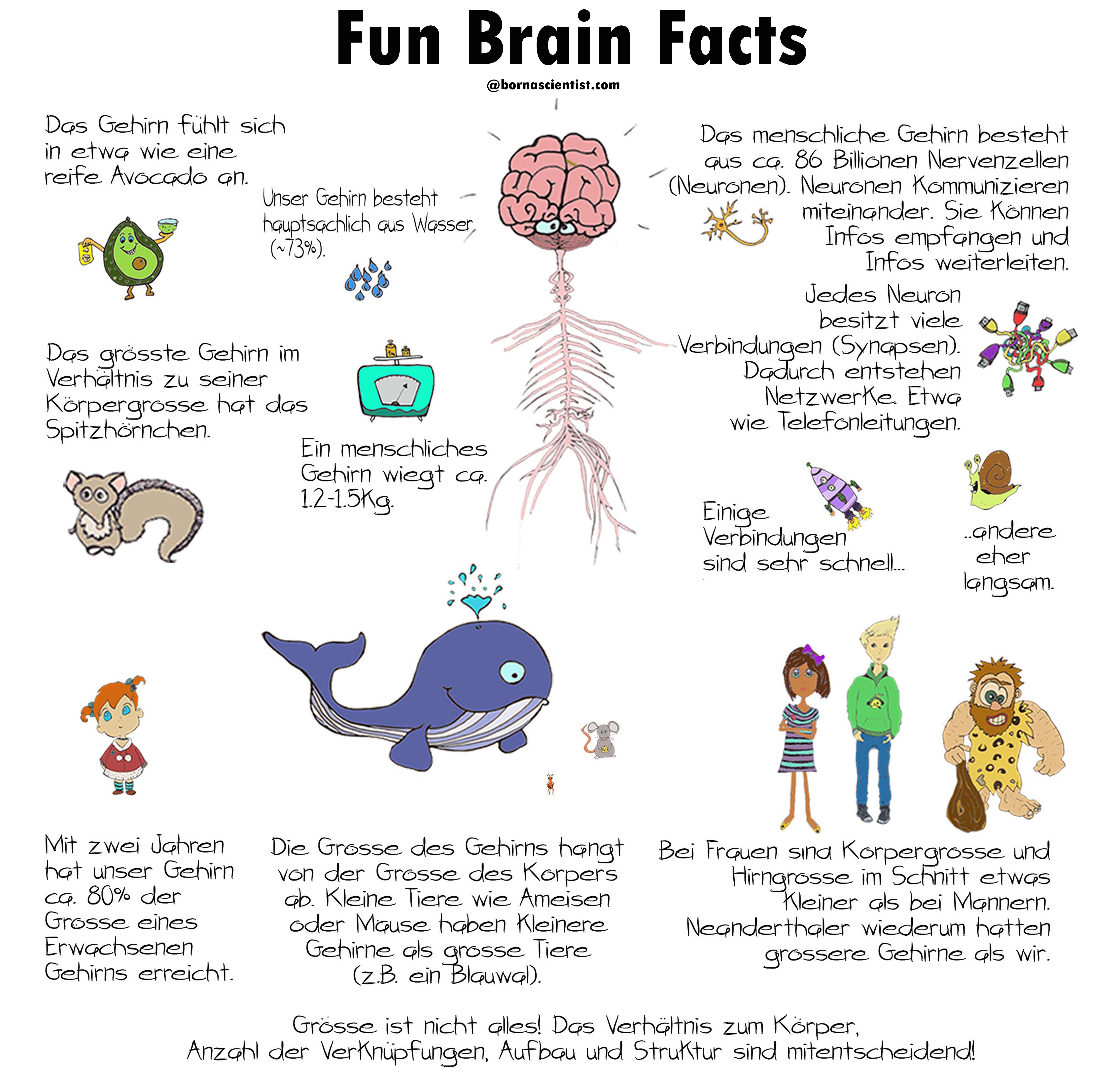Science Facts Brain: We Are All Born Scientists
